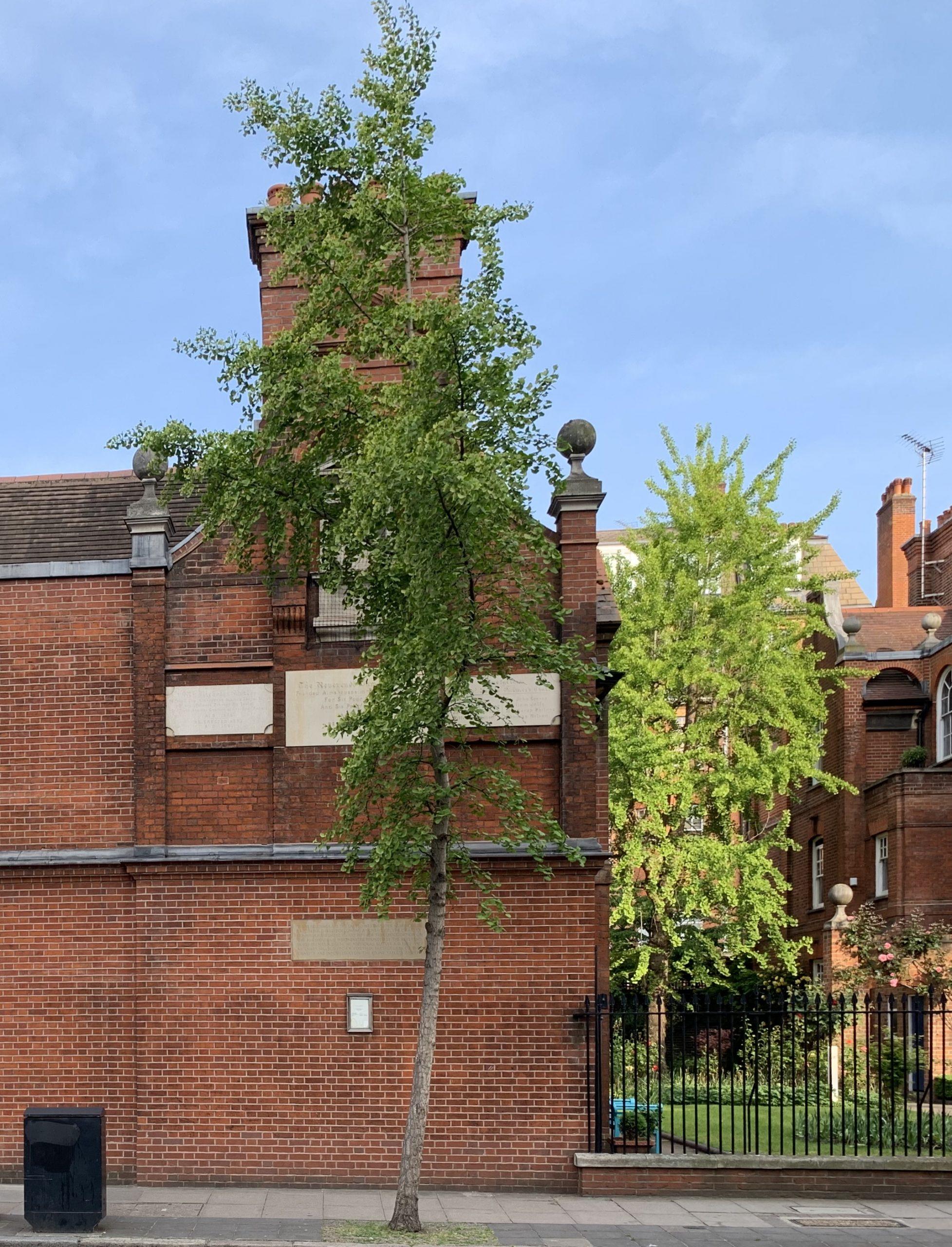 Old tree london